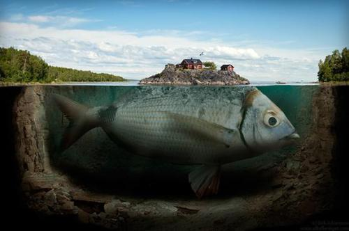 Fishy island by alltelleringet